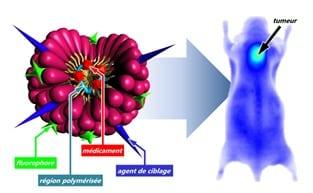 Les nano-vecteurs permettent de mieux cibler les tissus tumoraux.