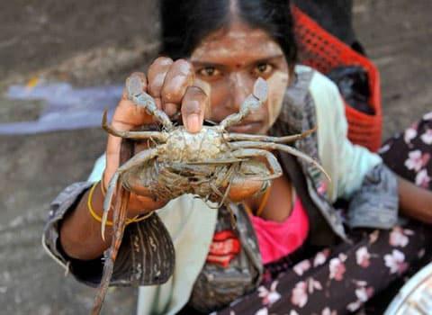 Photographie Birmanie crabe