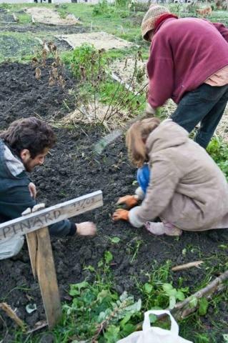 Récolte dans les Jardins d'utopie sur le campus de Saint-Martin-d'Hères où des étudiants cultivent leur légume en autogestion contre la direction de la fac et la police