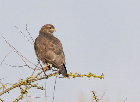 Buse variable LPO