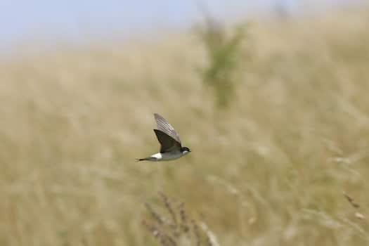 La population d'oiseaux est en déclin sur la région Auvergne-Rhône-Alpes © Guy Bourderionnet