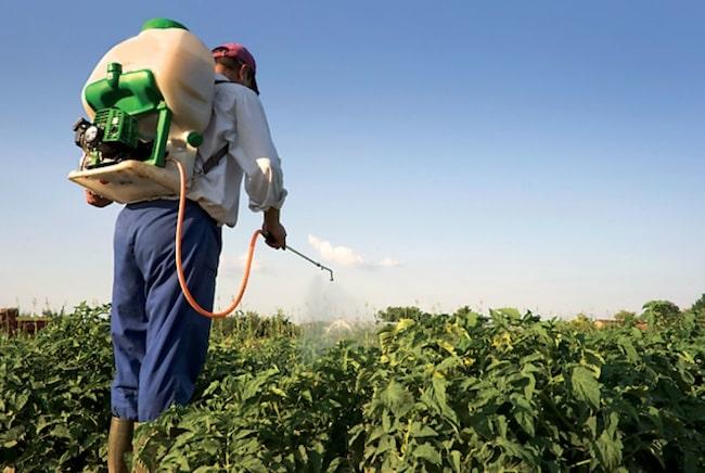 Pour les agriculteurs de la FDSEA, les « fake news » sont nombreuses concernant les pesticides. DR