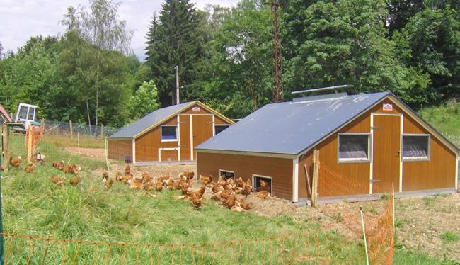 Poules pondeuses en plein air à la ferme du Ferouillet - © Association Adabel