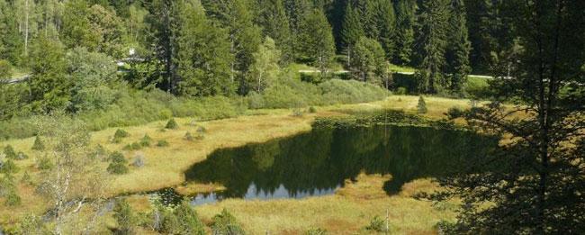 lac de luitel - ONF/RNN du lac de luitel