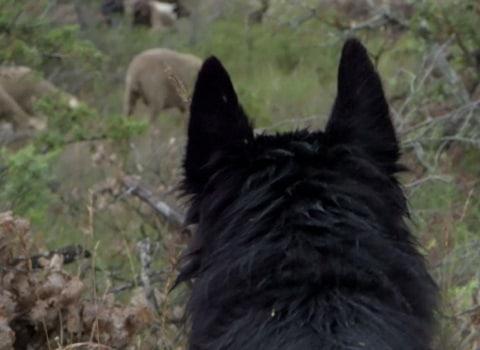 """Image du film """"La Gueule du loup"""", de Jérôme Ségur."""