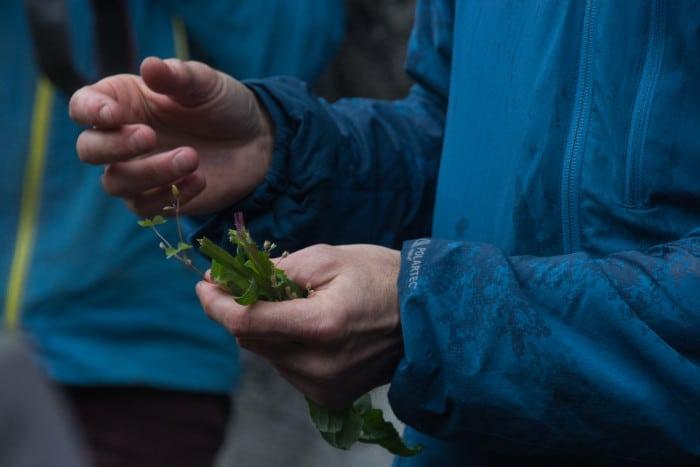 Rencontres Botaniques. © Yuliya Ruzhechka - Place Gre'Net