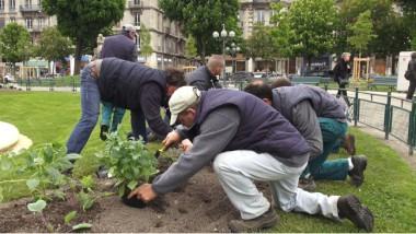 Des agents des espaces verts s'activent autour des plantations. © Joël Kermabon - Place Gre'net