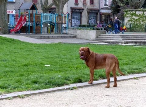 Un chien devant l'emplacement de la future aire de jeux financée par le budget participatif place Saint-Bruno à Grenoble. Séverine Cattiaux - placegrenet.fr