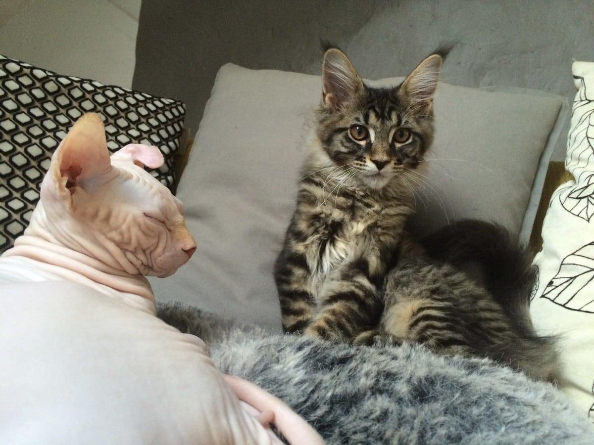 ronronth rapie deux bars chats ouvrent leurs portes grenoble place gre 39 net. Black Bedroom Furniture Sets. Home Design Ideas