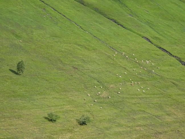 Alpage en Besse-en-Oisans. © André Weill