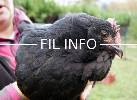 Suite à la découverte d'un virus aviaire hautement pathogène dans des pays européens, le Ministère met en place des mesures de protection des élevages