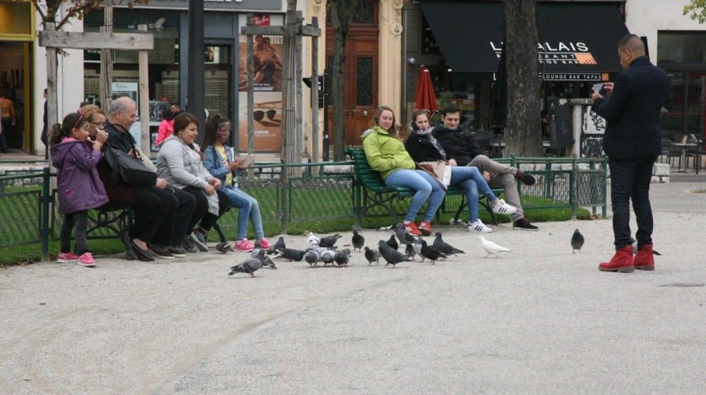 Le nourrissage des pigeons au détour d'un banc : une mauvaise habitude ? © Florent Mathieu - Place Gre'net
