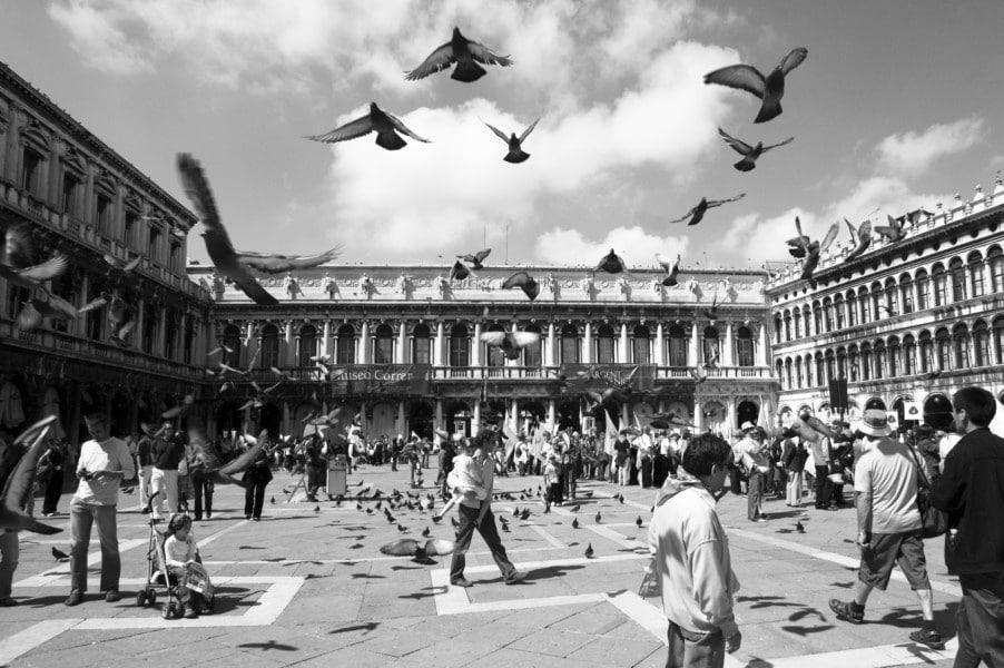 Les pigeons participent à l'image de la place Saint-Marc. Pourquoi pas ailleurs ? DR