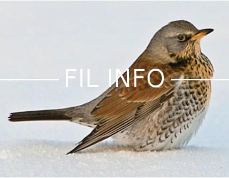 La chasse aux oiseaux de passage est suspendue en Isère jusqu'au 3 février. Une bonne mesure, mais tardive et partielle pour la LPO.