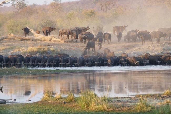 Depuis 2010, l'association Le Pic Vert installe avec d'autres partenaires des pompes solaires pour réapprovisionner les mares asséchées du parc national de Hwange au Zimbabwe. Crédit R. Foster