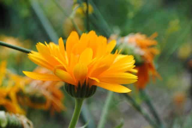 L'Appel des 100, titré « Nous voulons des coquelicots », est relayé et soutenu par nombre d'associations écologistes, dont la LPO Isère et la Frapna Isère.Disparition des abeilles, de la flore... La nature a des soucis à se faire © H. Foglar - Frapna
