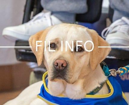 L'association Handi'Chiens remettra, le 29 avril, 10 chiens dressés à des personnes en situation de handicap pour les soutenir dans leur quotidien.