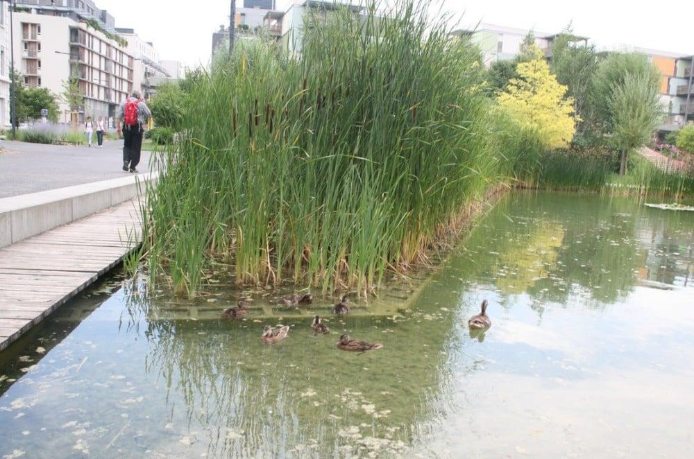 Cane et canetons dans l'étang de la Caserne de Bonne. © Florent Mathieu - Place Gre'net