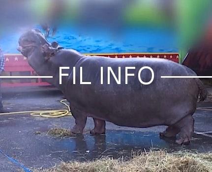 Le juge des référés a rejeté la demande de l'association One Voice de libération de l'hippopotame Jumbo. Le tribunal doit désormais se prononcer sur le fond