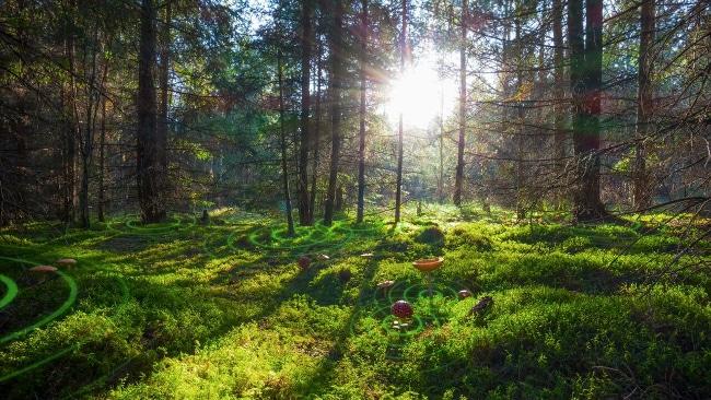 Les trésors cachés des plantes et L'intelligence des arbres, qui nous plongent dans l'intimité des arbres, sont programmés au Club jusqu'au 25 octobre 2017.