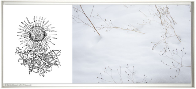 Diptyque, dessin et photographie, du Quartier Blanc de la Ville Bleue. ©Carole Vionnet & PieR Gajewski