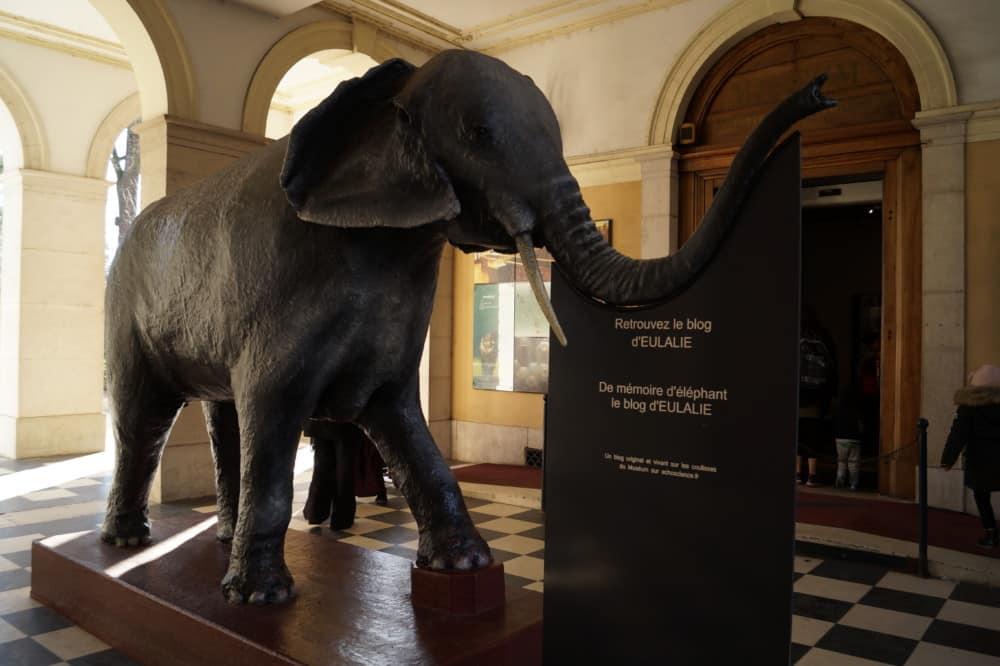Eulalie va retrouver les visiteurs du Muséum de Grenoble dès le mercredi 27 mai © Léa Raymond - Place Gre'net