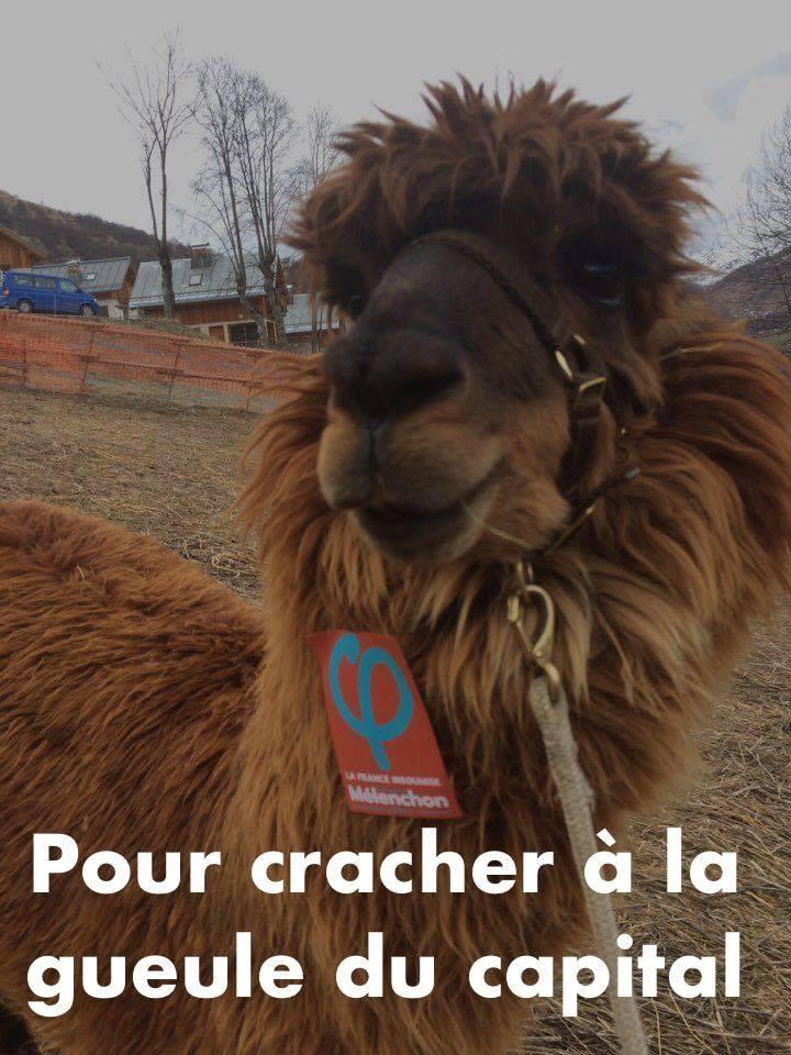 Un « lama insoumis »... contre l'exploitation des animaux exotiques ? © France Insoumise
