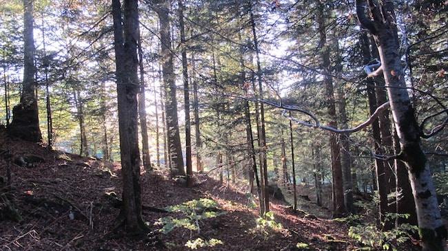 ONF : l'office national des forêts ne veut pas renoncer à sa gestion unique du patrimoine forestier © Patricia Cerinsek - Place Gre'net