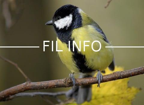 La LPO et le Muséum national d'Histoire naturelle invitent les personnes disposant d'un jardin à participer à un comptage d'oiseaux les 26 et 27 mai 2018.