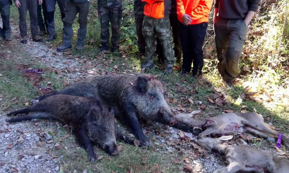 Gibier abattu lors d'une chasse au Boutat en 2017 @ Fédération départementale des chasseurs de l'Isère