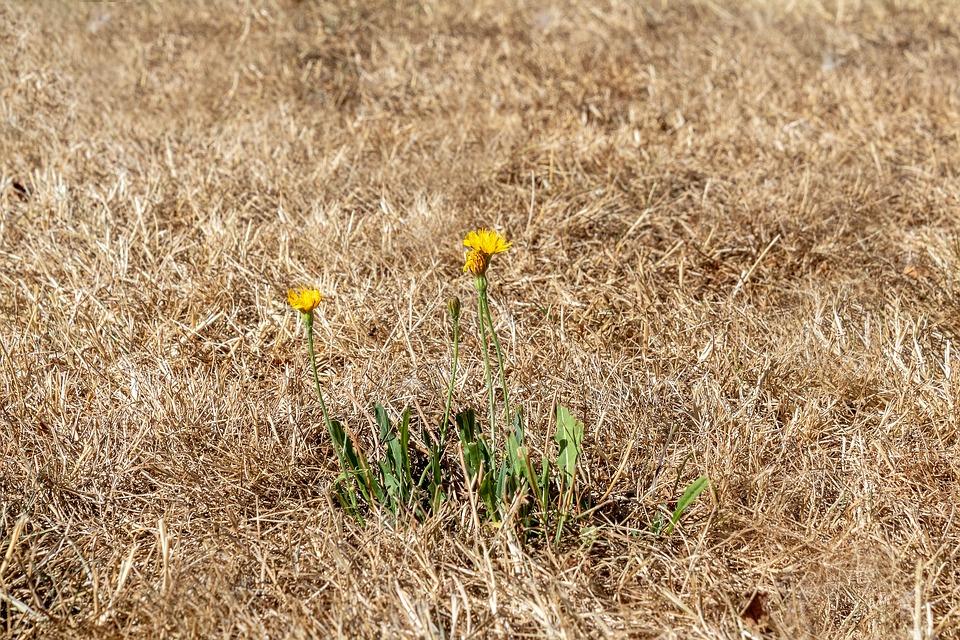 La sécheresse sévit sur le département de l'Isère. DR