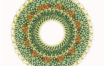 Schéma du virus de la rougeole. © Gutsche I., Desfosses A. et al.