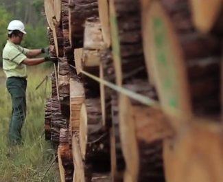 """En Isère, les agents de l'Office national des forêts dénoncent une gestion comptable des forêts. Et une vision """" cosmétique """" de l'environnement."""