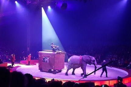 Après quatre années à Voiron, le festival international du cirque fait son retour à Grenoble. Un rétropédalage très... pragmatique.