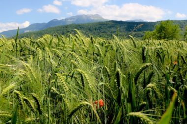Coup de chaud sur les Alpes : paysage d'été en Chartreuse