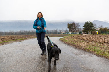 Tous les chiens sont sortis au moins une fois par jour de la fourrière et du refuge grâce aux bénévoles. © L.Frangella-Grenoble-Alpes Métropole