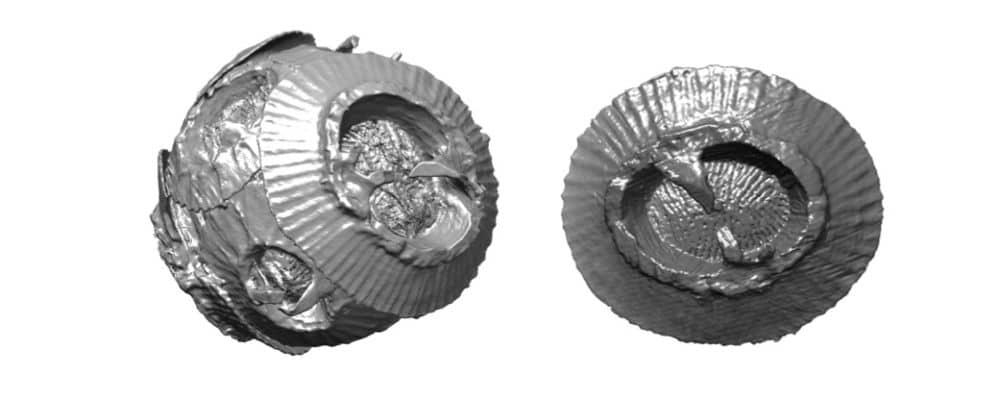De la coccosphère (gauche) au coccolithe (droite). Les coccolithophores sont des algues marines microscopiques qui absorbent le dioxyde de carbone pour leur croissance et le libèrent lors de la création de leurs coquilles calcaires, sorte de mini-boucliers, appelées coccolithes. © Alain Gibaud, IMMM, CNRS UMR 6283, Le Mans Université