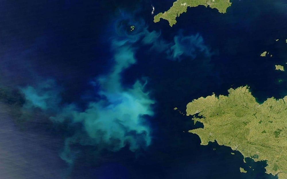 Efflorescence de coccolithophores vue de l'espace. Lors de l'efflorescence, les coccolithophores se multiplient par millions et se répandent en gigantesques traînées blanches donnant à l'océan un aspect laiteux. © NASA