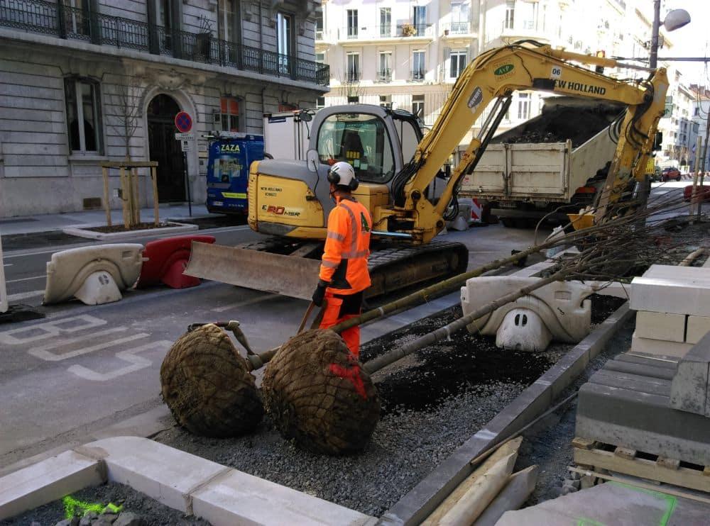 Deux arbres en attente d'être plantés. © Florent Mathieu - Place Gre'net