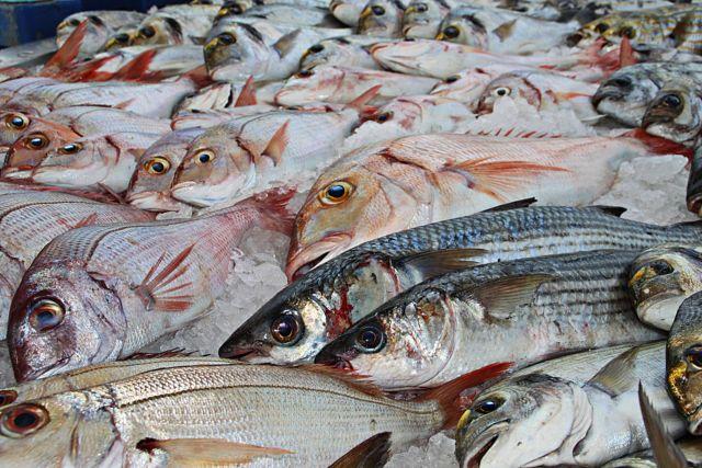 L'association L214 organise à Grenoble et dans d'autres villes de France un happening le samedi 30 mars à l'occasion de la Journée pour la fin de la pêche.. DR