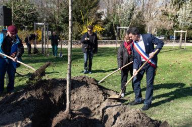 Arbre de la fraternite planté le mercredi 20 mars 2019 au parc Paul-Mistral.