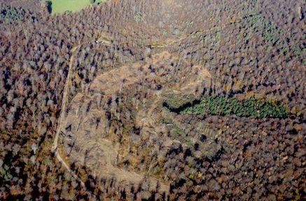 Dans la forêt des Chambarans occupée par les zadistes, le défrichement des 90 hectares du projet de Center parcs n'est pas terminé © Center parcs en faillite financière.