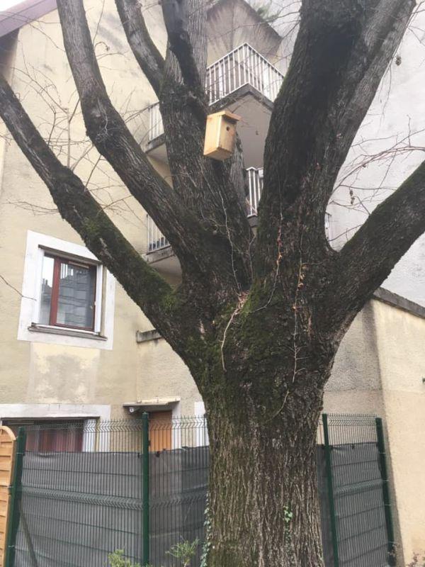 Près de 500 nichoirs à chauves-souris, hirondelles et mésanges ont été installés sur Grenoble. © Projet chauve souris - Facebook