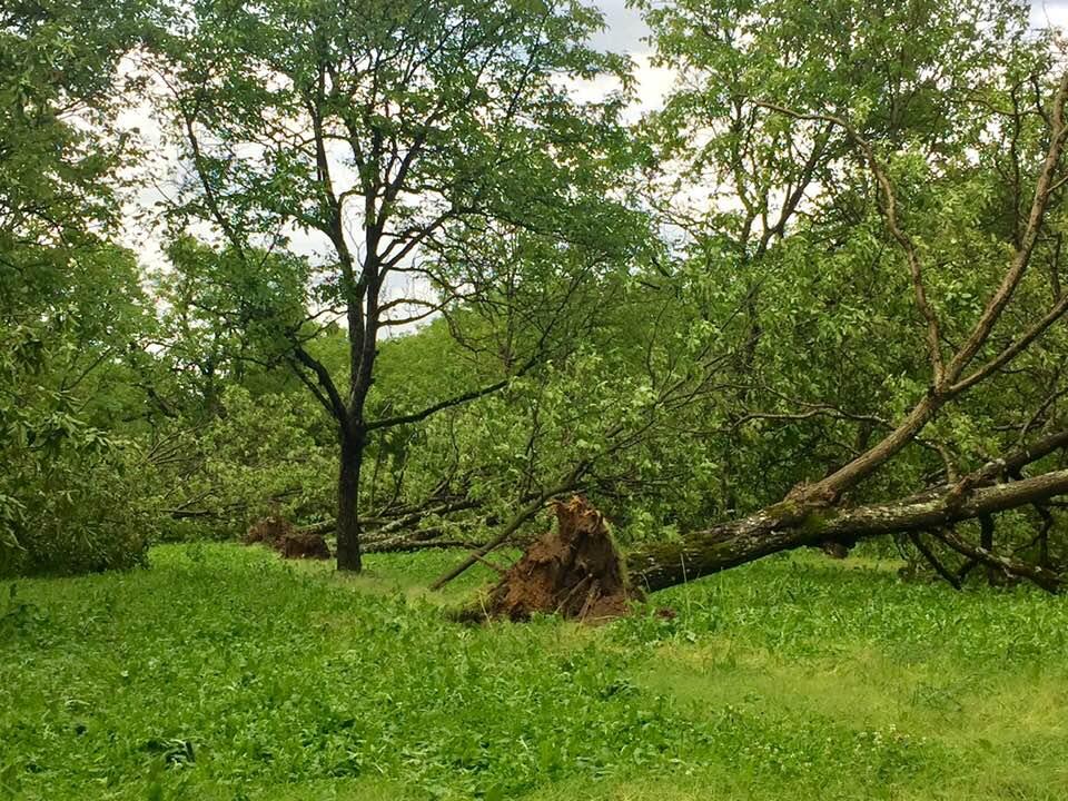 Trois communes de l'Isère sont reconnues en catastrophe naturelle après les orages du 15 juin, en attendant le dispositif Calamités agricoles.Les dégâts des orages et vents violents du 15 juin © Cornu-Emieux Renaud - Facebook