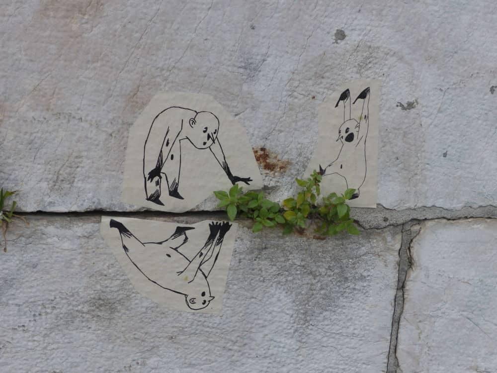 Plantes Sauvages Rue Grenoble Credit Photo Nina Soudre 2