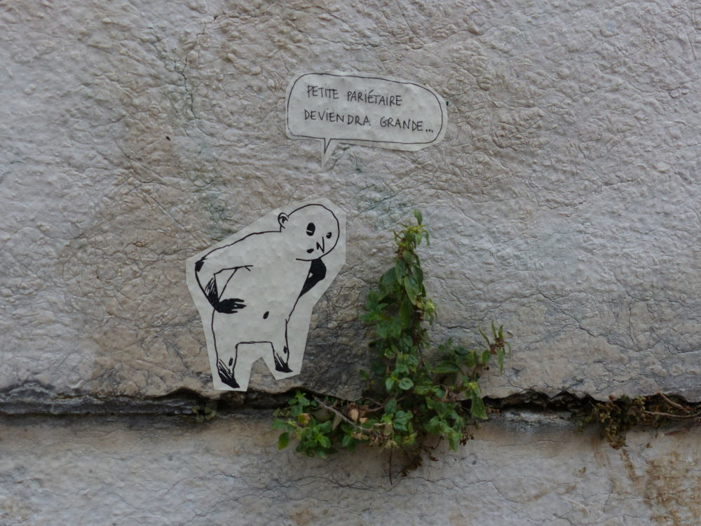 Plantes Sauvages Rue Grenoble Credit Photo Nina Soudre 5