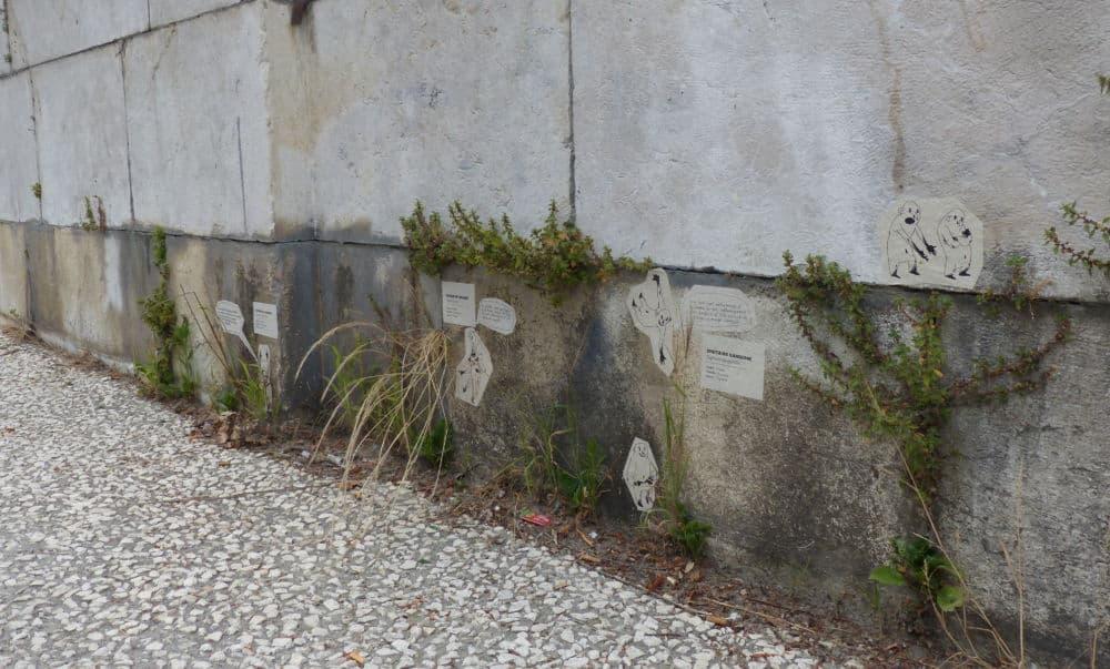 Plantes Sauvages Rue Grenoble Credit Photo Nina Soudre 88