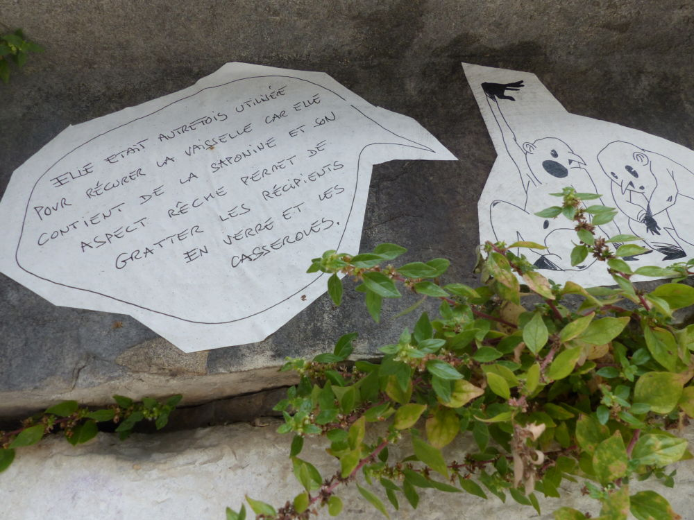 Plantes Sauvages Rue Grenoble Credit Photo Nina Soudre Z