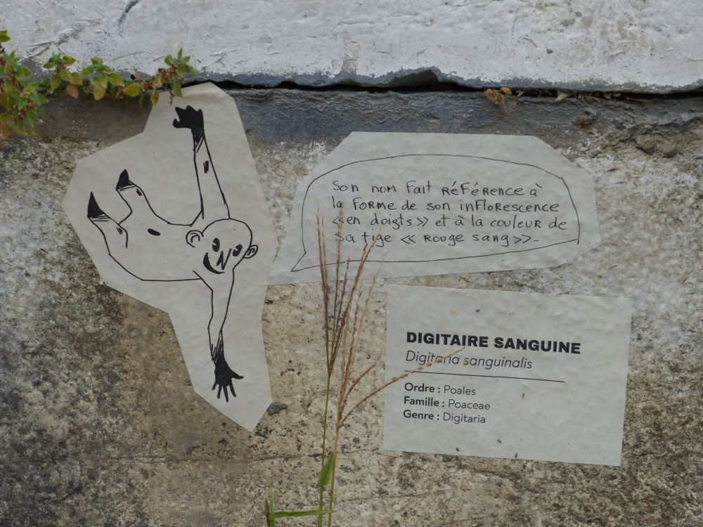 Plantes Sauvages Rue Grenoble Credit Photo Nina SoudreT