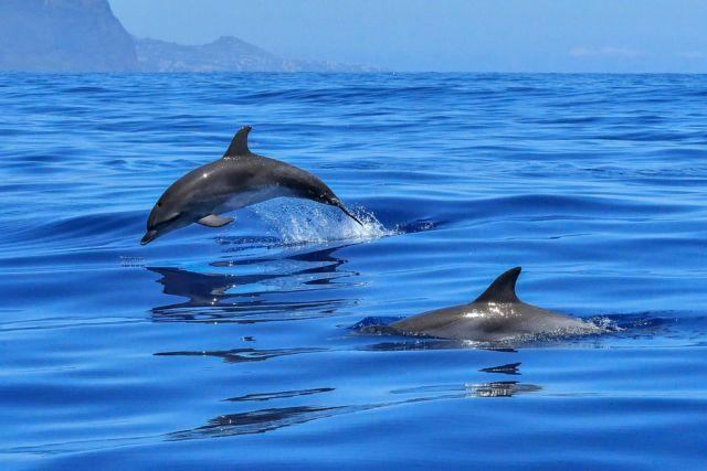 Parmi les mammifères marins, le dauphin est le plus célèbre... et le plus populaire. DR